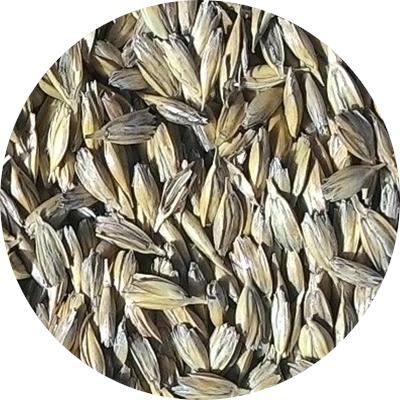 Ekologiškų SPELTA kviečių supirkimas (pašarui)