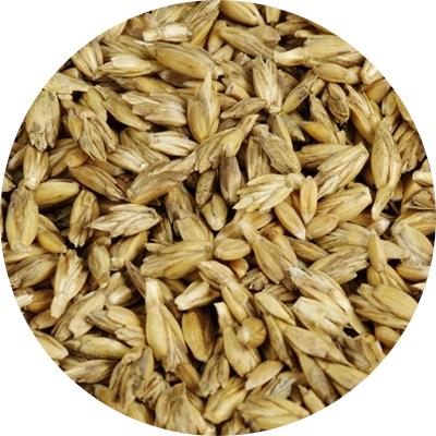 Ekologiškų SPELTA kviečių supirkimas (maistui)