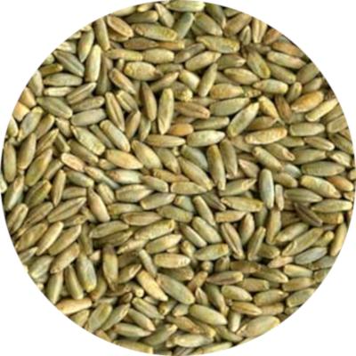 Ekologiškų rugių supirkimas (maistui)