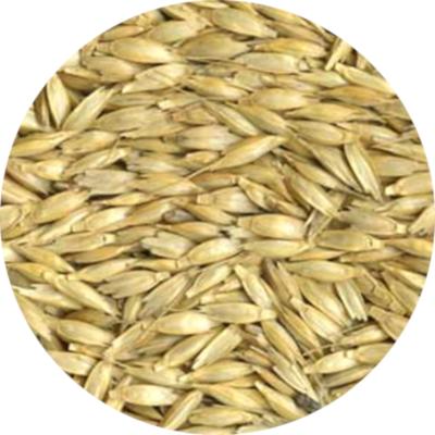 Ekologiškų miežių supirkimas (pasarui)